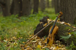 Violin in autumn forest